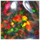 6.30 Qts Espectacular Opalo Floral